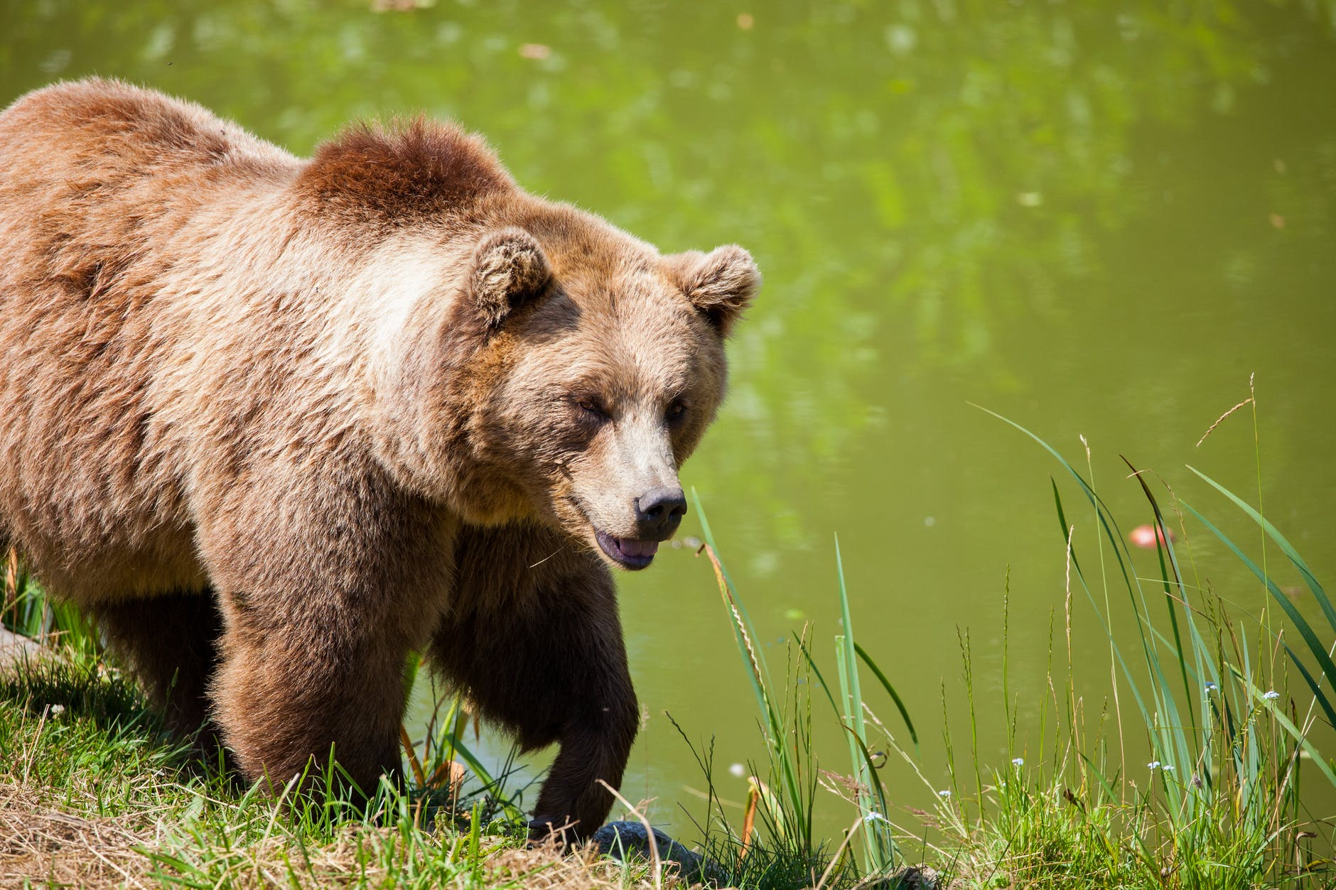 Things You Must Know When Camping In Bear Country