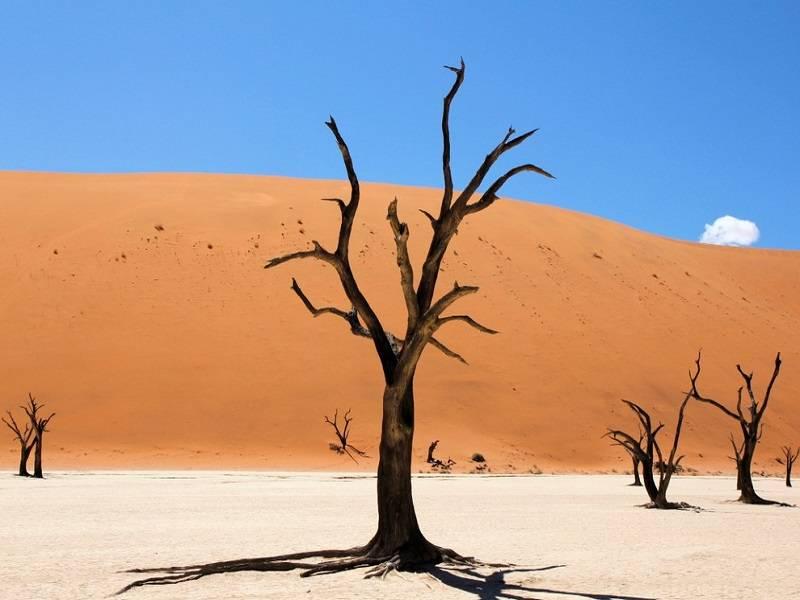 7. Camel Thorn Trees, Namibia