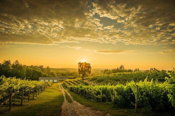 Michigan Winery