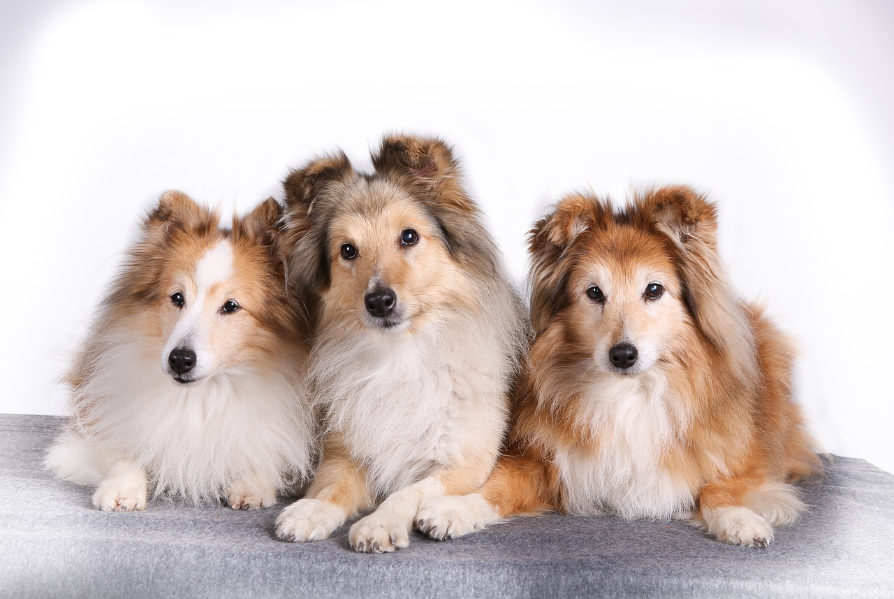 Transport & Relocate Your Pets From Singapore