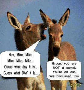 Donkey Hump Day