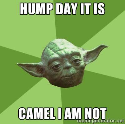 Camel I Am Not